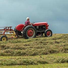 Farming by Michael Wolfe - Landscapes Prairies, Meadows & Fields ( grasses, field, farmer, rake, hay, tractor, man,  )