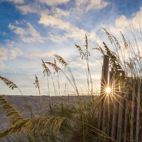 Sunrise and Sea Oats by Sarah Noonan - Landscapes Beaches ( destin florida, beach fences, sand dunes, sea oats, sunrise, beach, destin )