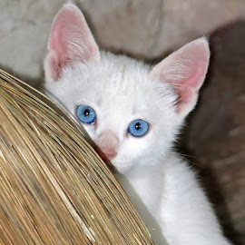 by Boris Buric - Animals - Cats Kittens