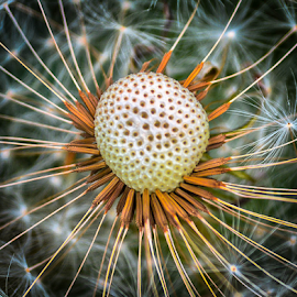 by Dragan Rakocevic - Nature Up Close Other plants