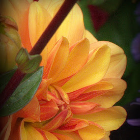 Colors of the Sun by Jeannie Matteson - Flowers Flower Arangements