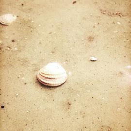 Shells & Sand by Seashadow Houseye - Instagram & Mobile iPhone