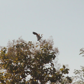 Landing by Deodatta Patankar - Nature Up Close Other Natural Objects ( bird, migration, landscape, waterfront, tree tops,  )