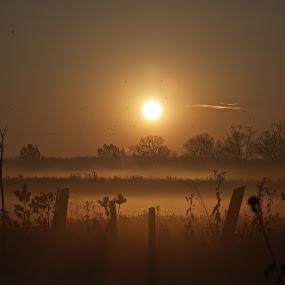 Sunrise by David Vanveen - Backgrounds Nature
