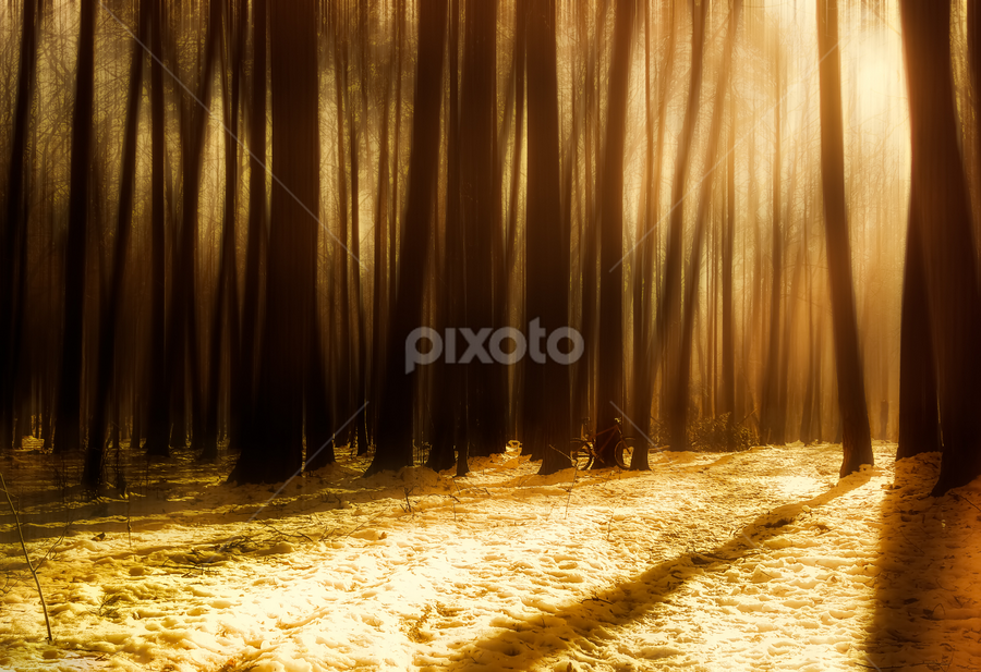 Winter morning in the forest by Roberto Sorin - Landscapes Forests ( nobody, mystery, bright, frost, shine, hoarfrost, nature, cold, shadow, snow, sunshine, light, sunbeams, forest, sunlight, rays, december, magic, winter, trunk, dawn, environment, season, branch, scene, trees, woodland, view, day, haze, icy, landscape, sun, tranquil, sunny, illumination, misty, beautiful, snowy, morning, woods, foggy, blue, fog, freeze, background, outdoor, sunrise, scenery, mist,  )