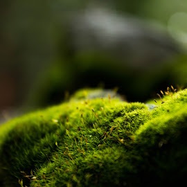 Tiny forest by Andrew Jouffray - Abstract Macro