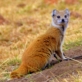 by Melody Pieterse - Animals Other Mammals (  )