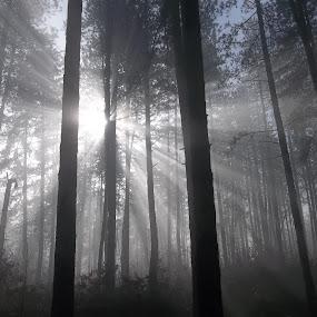 Гора by Georgi Kolev - Landscapes Forests ( гора., слънце., мъгла., силуети., време. )