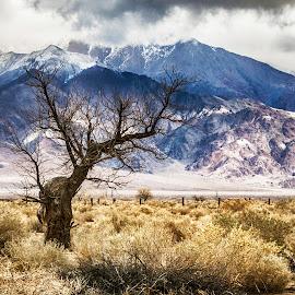 High Prairie by Richard Michael Lingo - Nature Up Close Trees & Bushes ( grassland, sierra nevada, tree, california, nature up close )