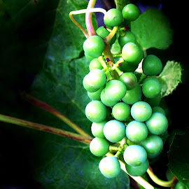 SWEET GRAPES by Wojtylak Maria - Food & Drink Fruits & Vegetables ( grapes, food, green, fruits, healty )