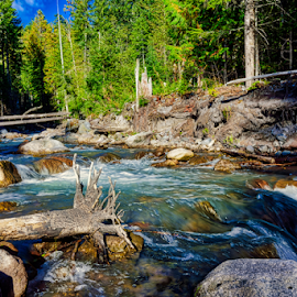 Tree Stump Ans stream by Kent Moody - Landscapes Forests ( brook, stream, washington, mount rainer, flowing,  )