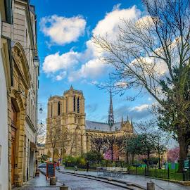 Right here? by Bobo Chuckleworth - Buildings & Architecture Public & Historical ( paris, europe, sky, blue sky, blue, notredame, beautiful, france, notre dame de paris )