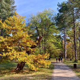 Park Vrana by Veselin Yanchev - City,  Street & Park  City Parks ( nikon d 5100 )