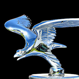 Silver Eagle by Ana Paula Filipe - Artistic Objects Antiques ( car, automotive, eagle, silver, black )