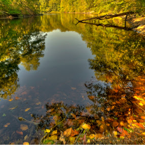 Autumn Reflections by Fran Gallogly - Landscapes Waterscapes ( water, orange, autumn, fallen, fall, pwcreflections, branch, trees, lake, gold, leaves, pond )
