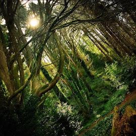 by Brandy Digre - Landscapes Forests (  )