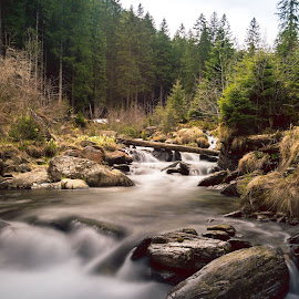 River by Alin Avram - Nature Up Close Water ( #river #forest #mountains #nature, #sun #green )