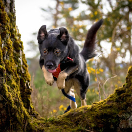 Luna Jump by Mike Newland - Animals - Dogs Running ( tree, dog, woods, running, jump,  )
