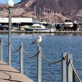 Harbor Friend by Diane Garcia - Instagram & Mobile iPhone ( water, lake mead, seagull, nevada )