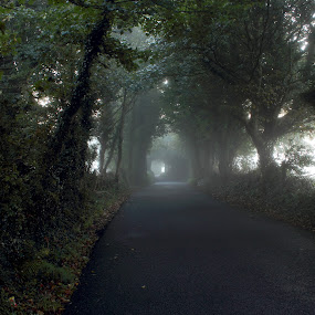 old goats road by Michael Croghan - City,  Street & Park  Street Scenes ( cool, bend in road, foggy, arched trees, cloudy, trees, sunrise, road )