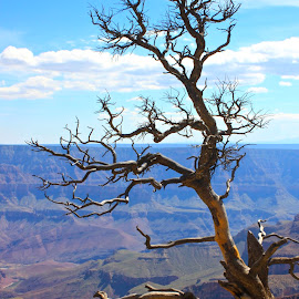 Sentinel by Darlene Dunnum - Nature Up Close Trees & Bushes ( mountains, desert, arizona, flagged, canyon, branches, dead tree, grand canyon )