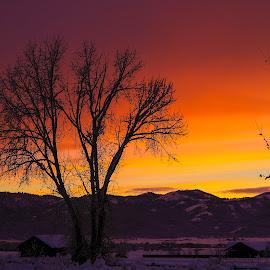 Purple Sunset by Chad Roberts - Landscapes Sunsets & Sunrises ( winter, sunset, snow, sundown, sunrise, evening,  )