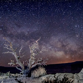 Making an Eternal Stand by Cameron Knudsen - Landscapes Starscapes ( knudsen outdoors, cameron knudsen, timeless moments photography, travel, landscape, tree of life, milky way, slow shutter speed, knudsen photography, night photography, nature, knudsen, national geographic, utah, stars, utah camping, utah hiking, long exposure, night, travel photography, relax, tranquil, relaxing, tranquility )