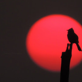 sunsets are proof that endings can often be beautiful too... by APRATIM MUKHERJEE - Animals Birds ( nature, sunset, nature up close, birds, photography )