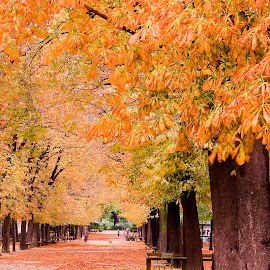 by Gale Perry - City,  Street & Park  City Parks ( paris, bench, autumn, path, orange trees, france )