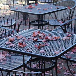 Closed For the Season by Terese Hale - City,  Street & Park  Street Scenes ( seasonal, autumn, wallowa lake, cafe, leaves )