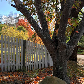 Under The Tree by Geoffrey Wols - Instagram & Mobile iPhone ( fall, leaves, tree, autumn, colourful, fence,  )