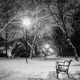 by Szabolcs Dudás - City,  Street & Park  City Parks ( park, bench, black and white, street, night,  )