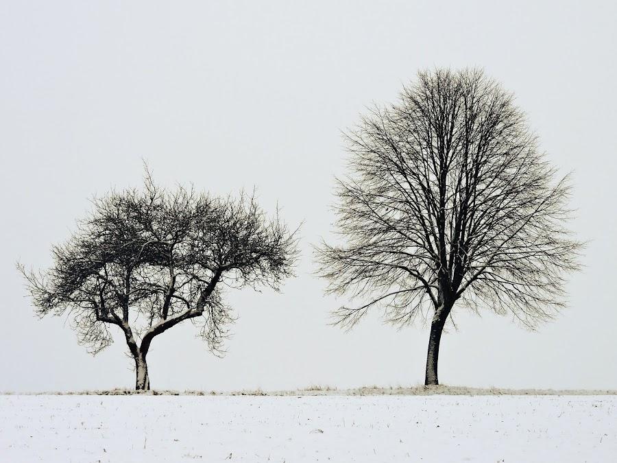 by Jana Kubínová - Nature Up Close Trees & Bushes