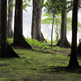 The Forest by Basuki Mangkusudharma - Landscapes Forests ( bogor, university, indonesia, forest, scientist, cifor, reasearcher )
