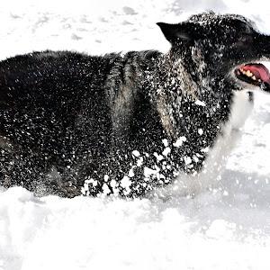 Dogs--Feb2013-0322.JPG