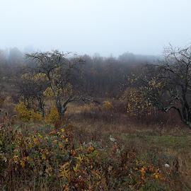 Есен by Georgi Kolev - Novices Only Landscapes ( гора., есен., мъгла., храсти., поляна. )