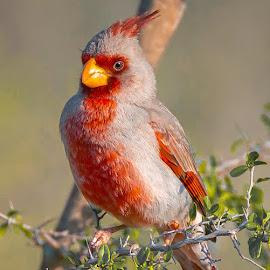 by Sandy Hurwitz - Animals Birds