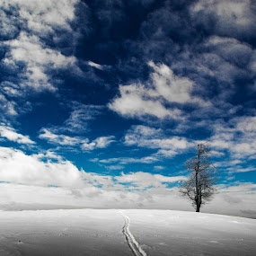 Solitude by Tamas Valentin - Landscapes Mountains & Hills ( winter, nature, tree, snow, solitude, landscape )