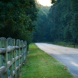 Chickasaw State Park, Tennessee by Mary Phelps - Landscapes Forests ( state park, tennessee, summer, chickasaw, country road )