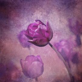 Purple by Fadz Fazi - Digital Art Things ( nature, purple, fine art, tulips, flower,  )