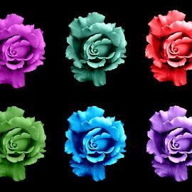 Rose of Many Colors by Robyn Gael Ellsworth - Digital Art Things ( rose, macro, colors, digital art, repeated )