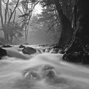 by Siniša Almaši - Black & White Landscapes ( water, up close, stream, wood, tree, nature, stone, rock, forest, landscape, river,  )