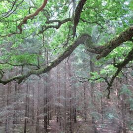Satumetsä by Jouni Linden - Landscapes Forests