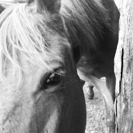 One very cheeky horse 🐴 trying to steel my plastic bag while I took photos of him. by Kara Turner - Animals Horses