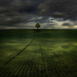 Day after by Tadej Turk-photography - Landscapes Prairies, Meadows & Fields (  )