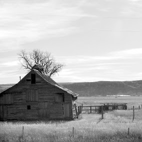 B&W Barn by Pam Jones - Buildings & Architecture Other Exteriors