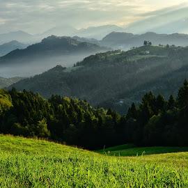 Prve meglice by Bojan Kolman - Landscapes Forests