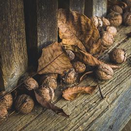 Walnuts by Mateja Proučil - Nature Up Close Gardens & Produce ( #autumn #brown #leafs #walnuts, #food )