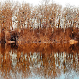 Treed Reflections by Kathy Woods Booth - Landscapes Waterscapes ( mirrored reflections, riverside, waterscape, trees, reflections, river )