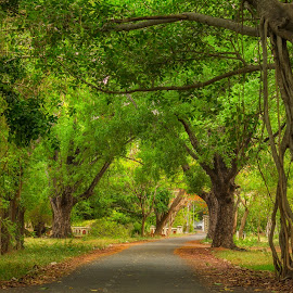 Pathway to peace by Nipun Soni - Nature Up Close Trees & Bushes ( contrast, park, tree, bark, path, bush, road, yellow, day, leaves, walk, gree )